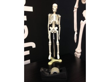 Skjelett hel kropp 84cm